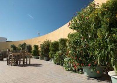 Step Up On Vine — Urban Rooftop Garden